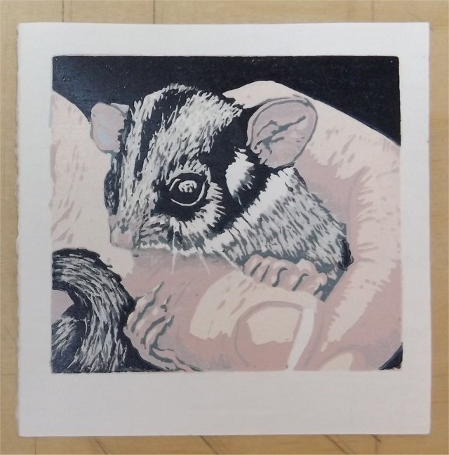 Possum in hand Colour 7 and Final Layer - Reduction Linocut, Jenn White